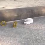 リアルソニック…?ちっちゃくてモコモコなハリネズミが、金のリングを取るだけの動画がカワイイ