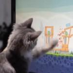画面に釘付け!?「アングリーバード」に夢中なネコちゃんが超カワイイ